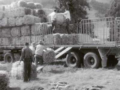 Millet Farming & Broom-Making