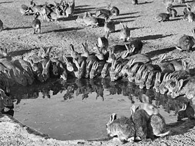 Langwill Rabbit Fumigator, traps and selling Akubra Hats